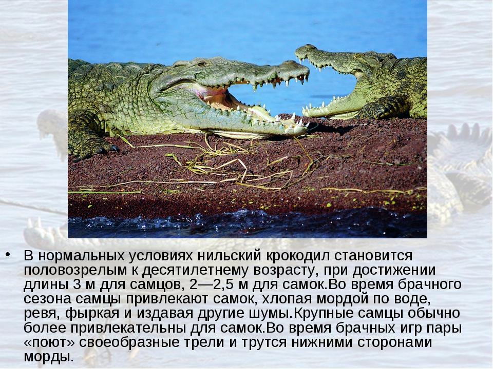 В нормальных условиях нильский крокодил становится половозрелым к десятилетне...