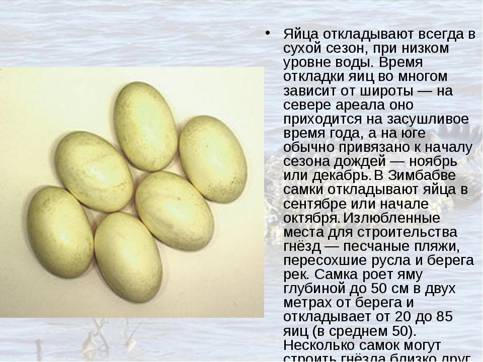 Яйца откладывают всегда в сухой сезон, при низком уровне воды. Время откладки...