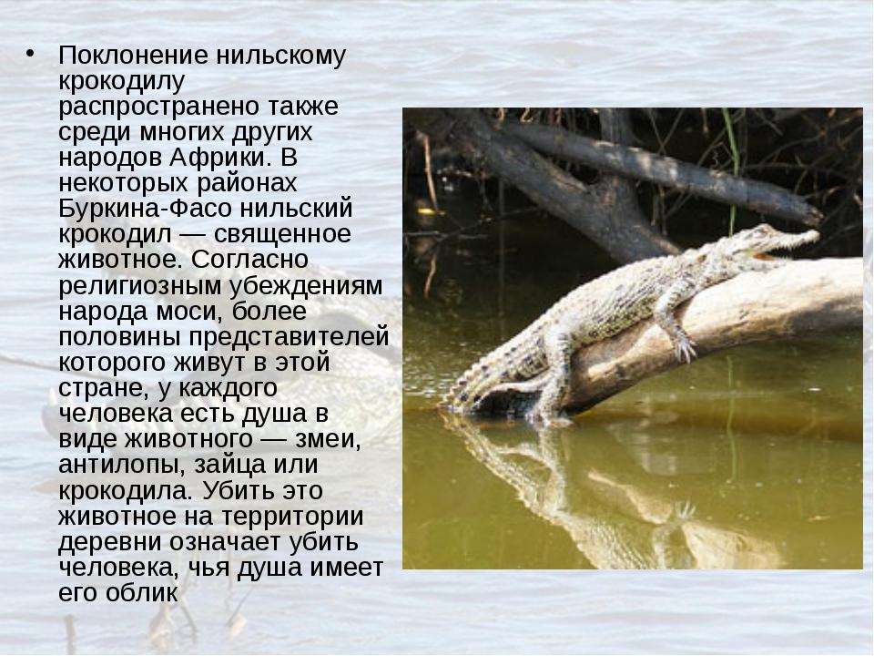 Поклонение нильскому крокодилу распространено также среди многих других народ...