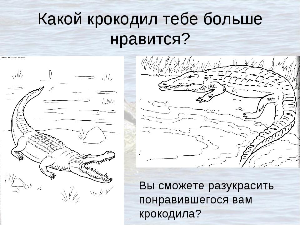 Какой крокодил тебе больше нравится? Вы сможете разукрасить понравившегося ва...