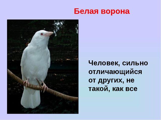 Белая ворона Человек, сильно отличающийся от других, не такой, как все