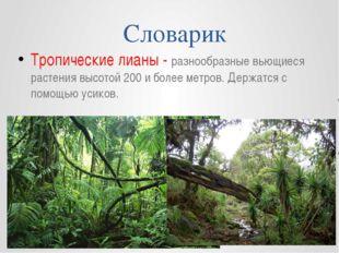 Словарик Тропические лианы - разнообразные вьющиеся растения высотой 200 и бо