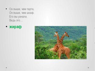 Он выше, чем парта, Он выше, чем шкаф. Его вы узнали, Ведь это… жираф