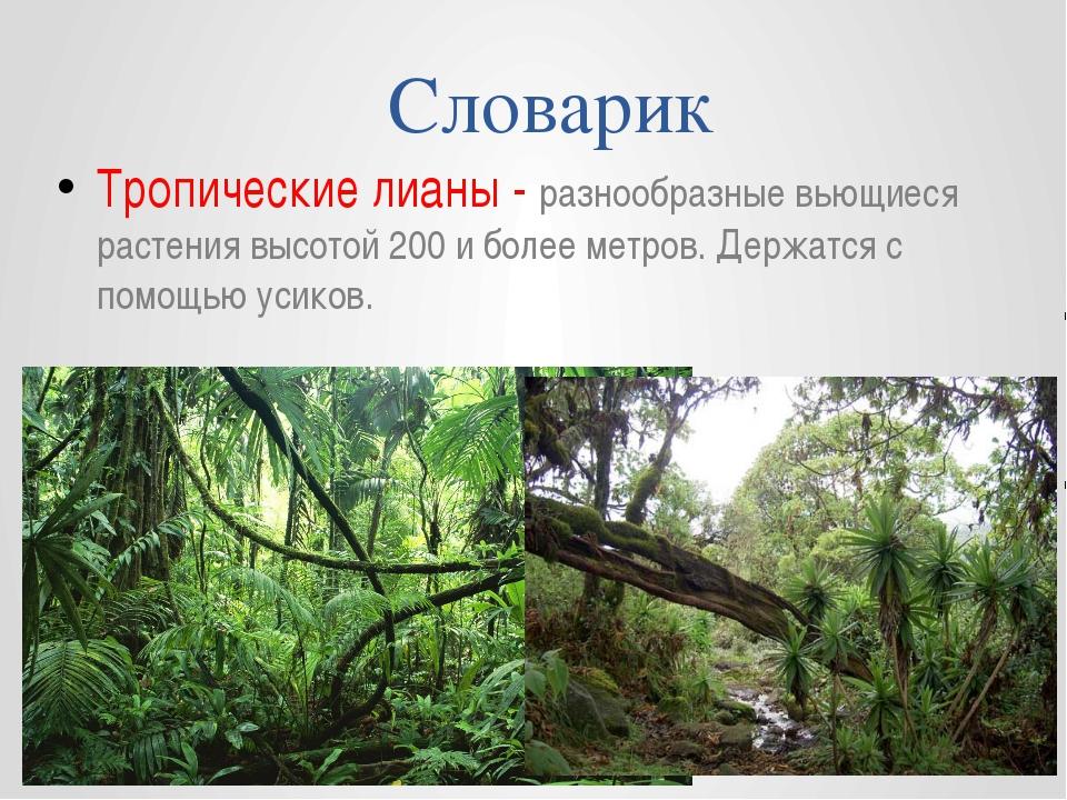 Словарик Тропические лианы - разнообразные вьющиеся растения высотой 200 и бо...