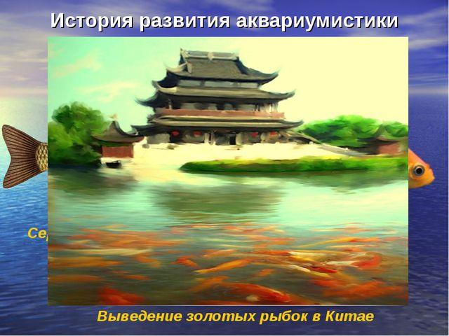 История развития аквариумистики Выведение золотых рыбок в Китае