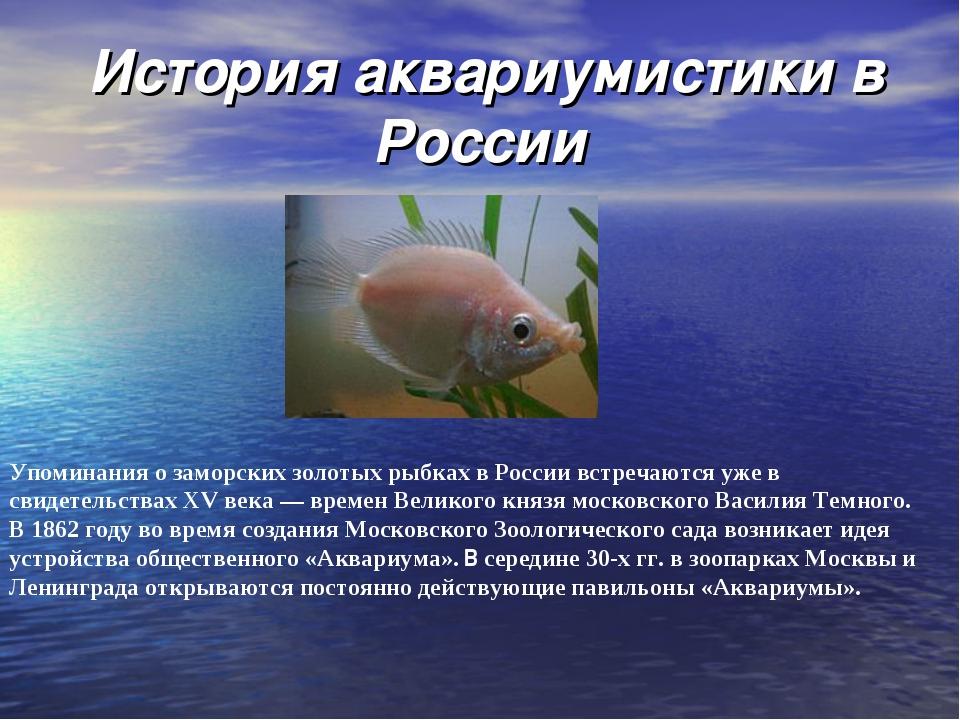 История аквариумистики в России Упоминания о заморских золотых рыбках в Росс...