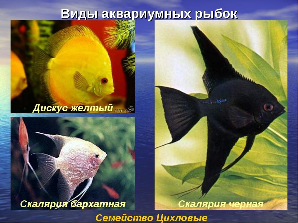 Название аквариумных рыб по картинками