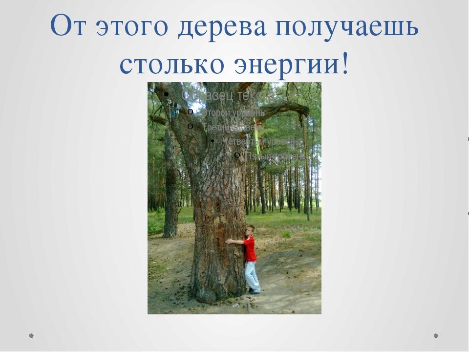 От этого дерева получаешь столько энергии!