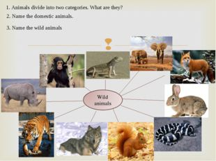 1. Animals divide into two categories. What are they? 2. Name the domestic a