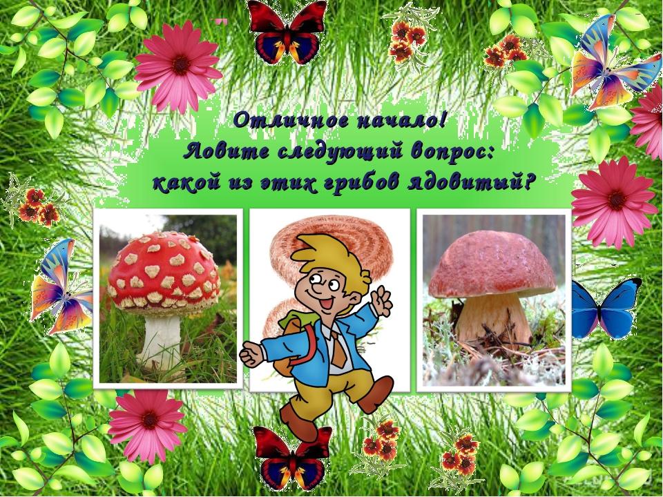 Отличное начало! Ловите следующий вопрос: какой из этих грибов ядовитый?
