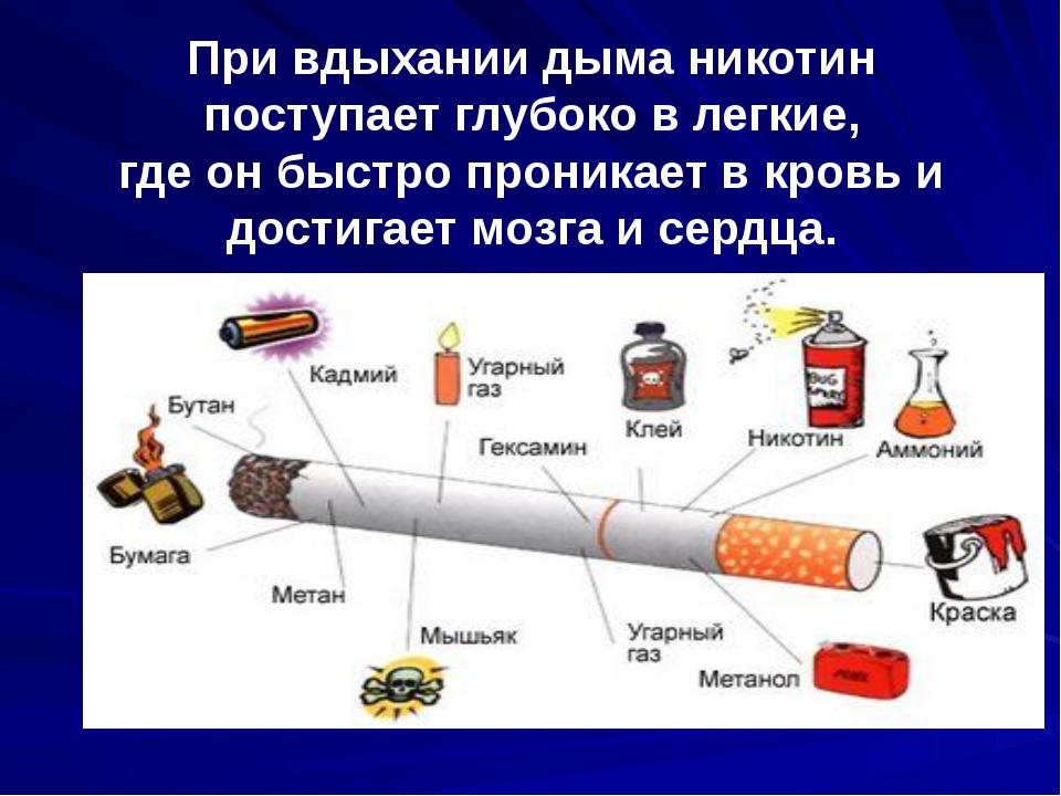 При вдыхании дыма никотин поступает глубоко в легкие, где он быстро проникает...