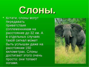 Слоны. Кстати, слоны могут передавать приветствия соплеменникам на расстояни