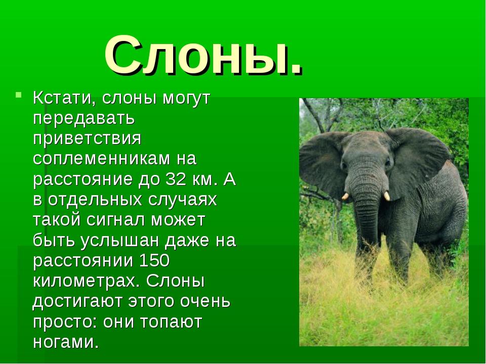 Слоны. Кстати, слоны могут передавать приветствия соплеменникам на расстояни...