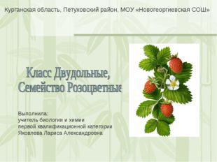 Курганская область, Петуховский район, МОУ «Новогеоргиевская СОШ» Выполнила: