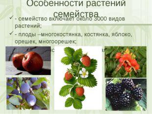 Особенности растений семейства - семейство включает около 3000 видов растений