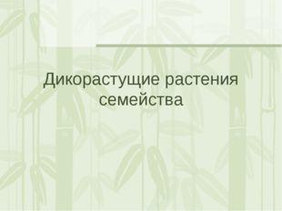 Дикорастущие растения семейства
