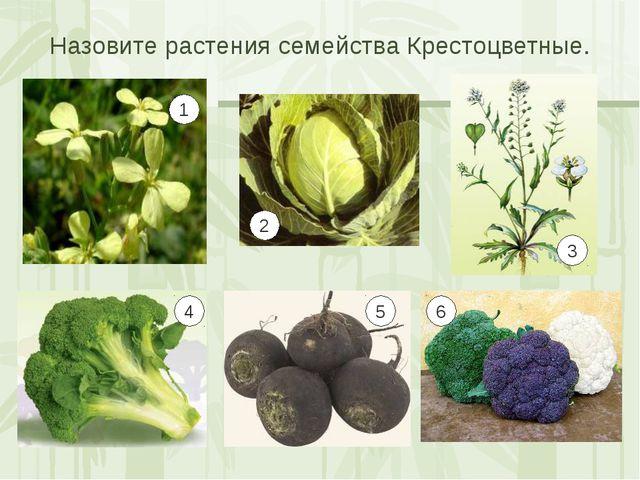 Назовите растения семейства Крестоцветные. 1 2 3 4 5 6