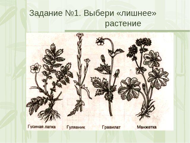 Задание №1. Выбери «лишнее» растение