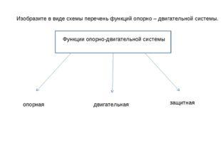 Изобразите в виде схемы перечень функций опорно – двигательной системы. Функц