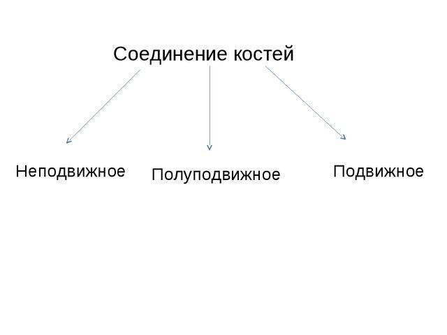 Соединение костей Неподвижное Полуподвижное Подвижное
