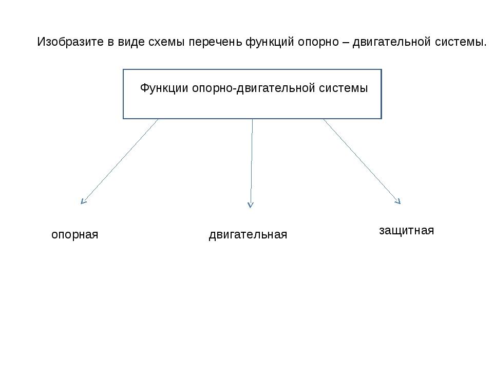Изобразите в виде схемы перечень функций опорно – двигательной системы. Функц...