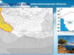 Субтропический пояс средиземноморская область