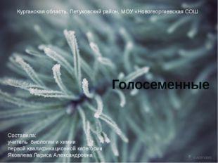 Курганская область, Петуховский район, МОУ «Новогеоргиевская СОШ» Голосеменны