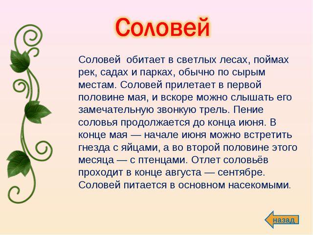 назад  Соловей обитает в светлых лесах, поймах рек, садах и парках, обычно...