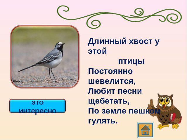 Длинный хвост у этой птицы Постоянно шевелится, Любит песни щебетать, По зем...