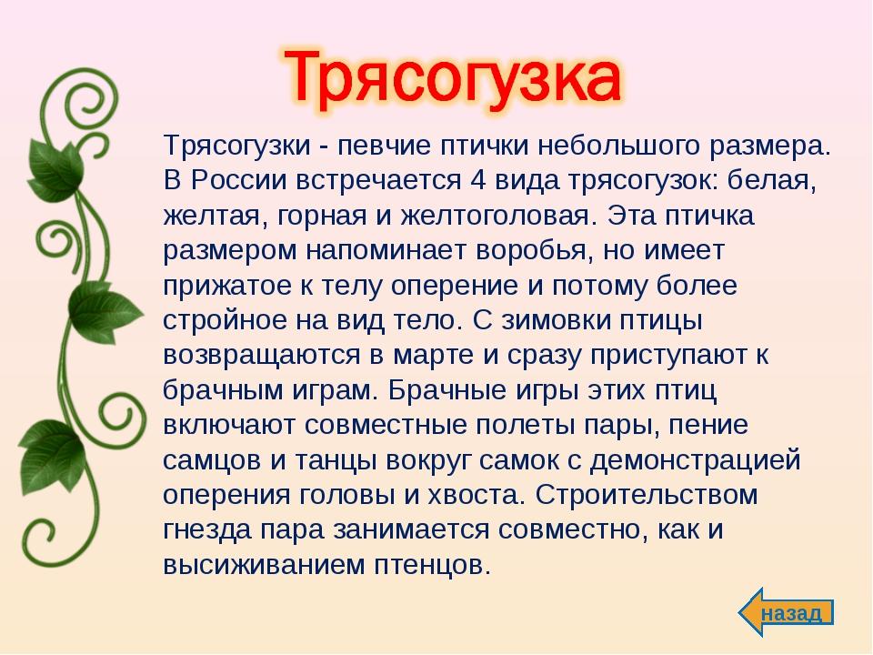 назад Трясогузки - певчие птички небольшого размера. В России встречается 4...