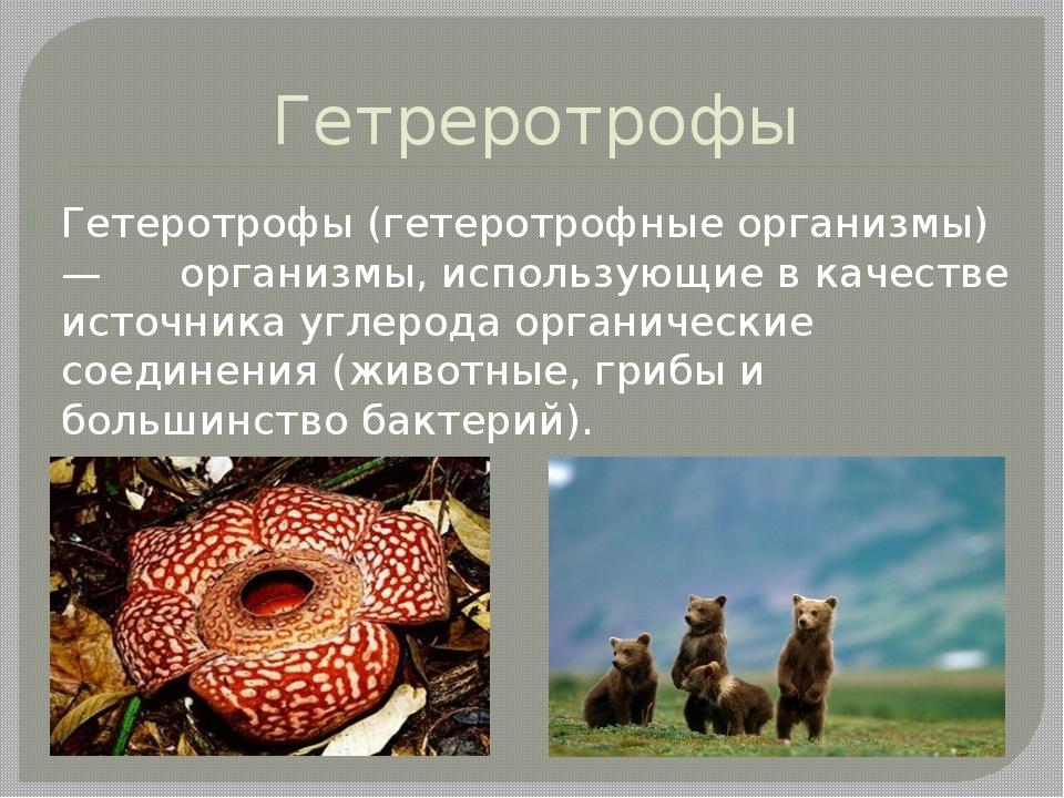 Гетреротрофы Гетеротрофы (гетеротрофные организмы) — организмы, использующие...