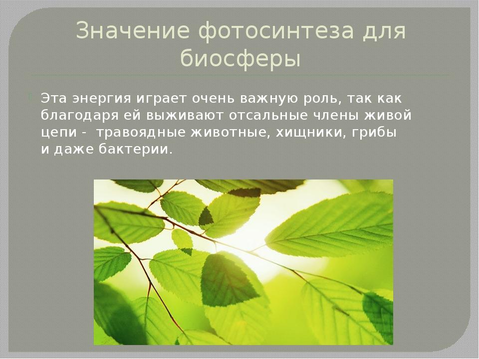 Значение фотосинтеза для биосферы Этаэнергия играет очень важную роль, такк...
