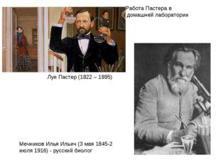 Работа Пастера в домашней лаборатории Мечников Илья Ильич (3 мая 1845-2 июля