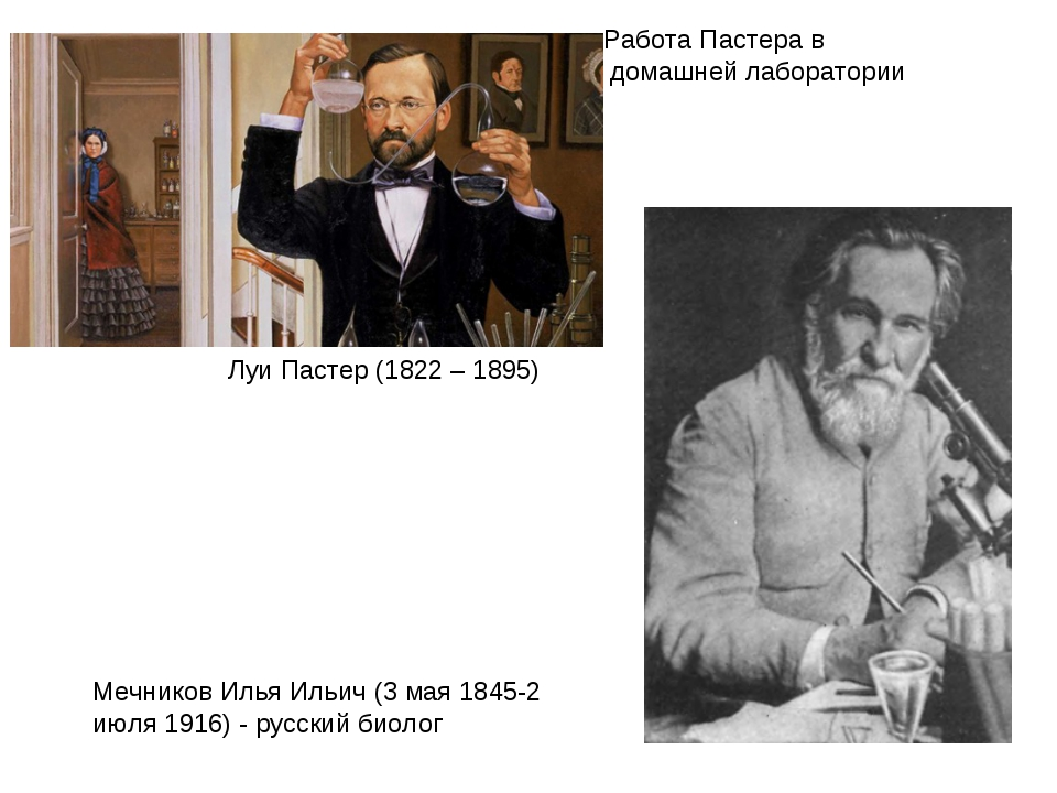 Работа Пастера в домашней лаборатории Мечников Илья Ильич (3 мая 1845-2 июля...