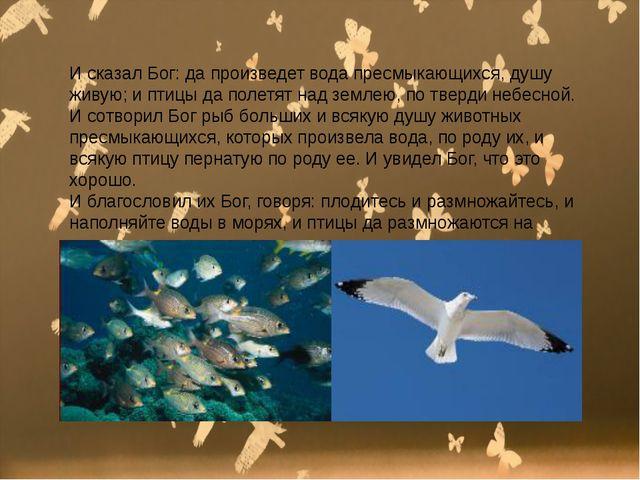 И сказал Бог: да произведет вода пресмыкающихся, душу живую; и птицы да поле...