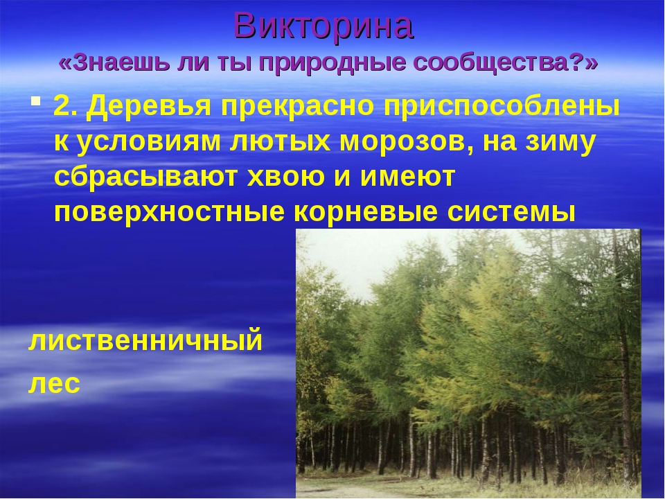 Викторина «Знаешь ли ты природные сообщества?» 2. Деревья прекрасно приспособ...