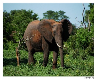 http://img0.liveinternet.ru/images/attach/b/3/8/926/8926877_99_africa14.jpg
