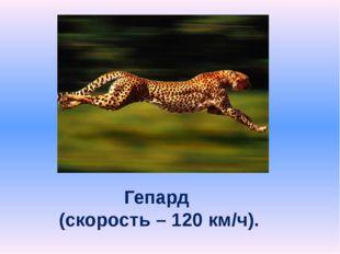 Гепард (скорость – 120 км/ч).