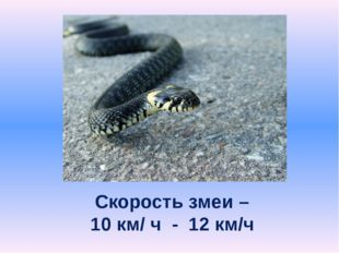 Скорость змеи – 10 км/ ч - 12 км/ч