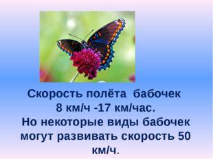 Скорость полёта бабочек 8 км/ч -17 км/час. Но некоторые виды бабочек могут ра