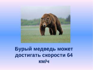 Бурый медведь может достигать скорости 64 км/ч