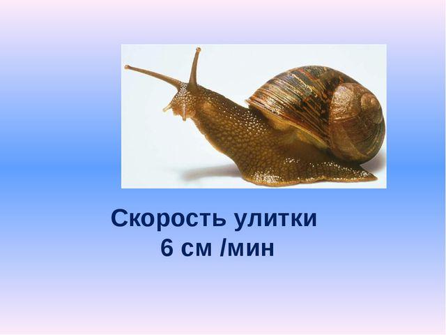 Скорость улитки 6 см /мин