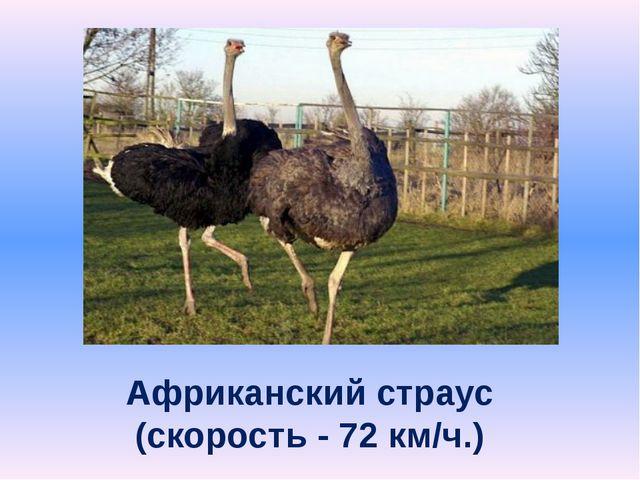 Африканский страус (скорость - 72 км/ч.)