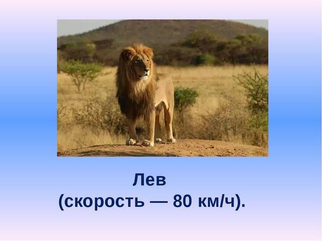 Лев (скорость — 80 км/ч).