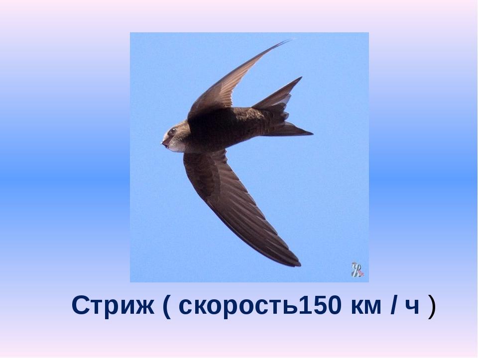 Стриж ( скорость150 км / ч )