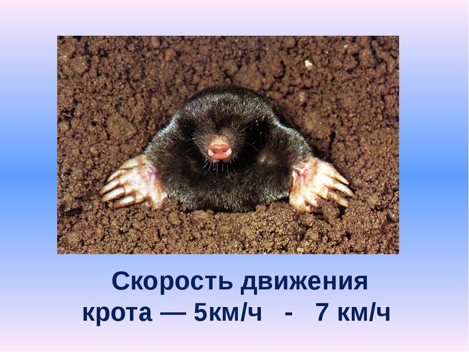 Скорость движения крота — 5км/ч - 7 км/ч