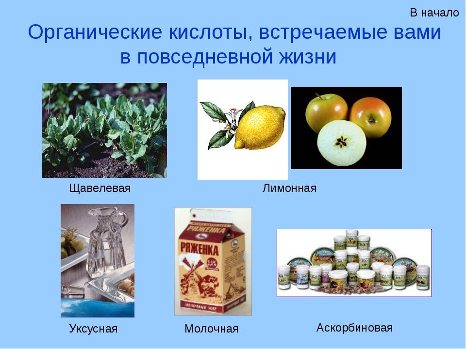 Органические кислоты, встречаемые вами в повседневной жизни Щавелевая Лимонна...