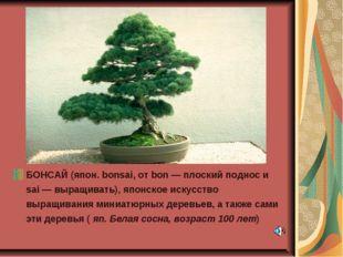 БОНСАЙ (япон. bonsai, от bon — плоский поднос и sai — выращивать), японское и