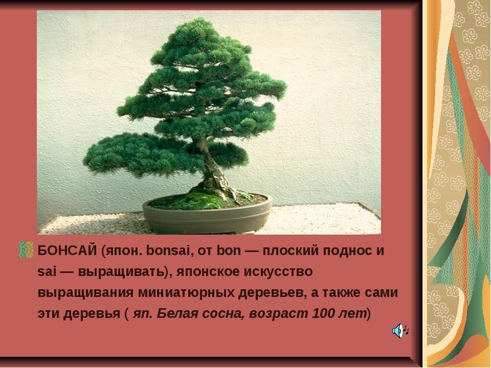 БОНСАЙ (япон. bonsai, от bon — плоский поднос и sai — выращивать), японское и...