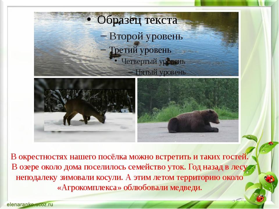 В окрестностях нашего посёлка можно встретить и таких гостей. В озере около д...